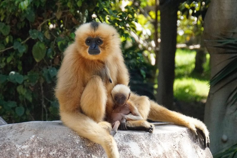 Los parques zoológicos, al rescate de especies en peligro de extinción